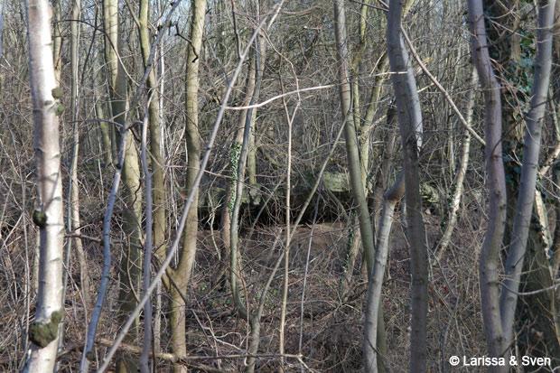 Sex im Bunker – Ganz versteckt im Wald